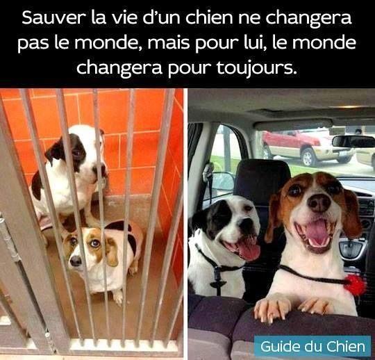 Sauver la vie d'un chien ne changera pas le monde, mais pour lui, le monde changera pour toujours.