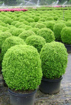 17 best images about plants for moist shade on pinterest. Black Bedroom Furniture Sets. Home Design Ideas