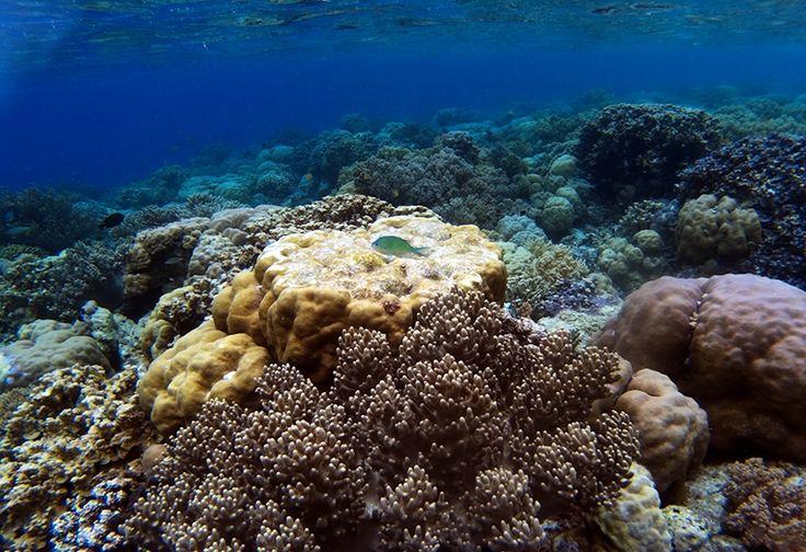 Destinasi Wisata Bawah Laut di Jepara Mulai Diminati Wisatawan