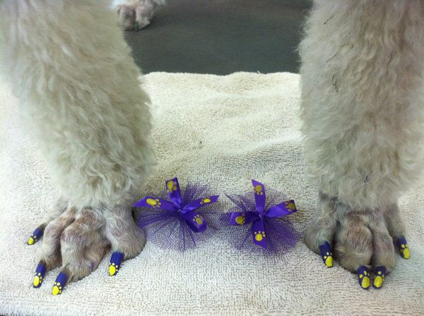Dog pedicures, complete with nail art that rivals human nail art, have become all the rage. This is Ugly!