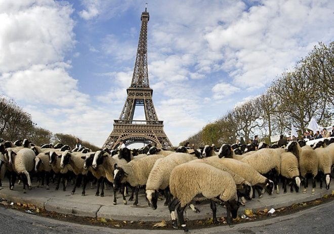 With pens and signs in hand, millions of Parisians stand up for the right to spread lies and hateful cartoons about 1 billion of the planet's people. It has been noted by many around the world of the protesters' striking resemblance to sheep.