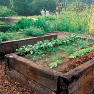 Good old fashion railway sleepers make beautiful garden beds.
