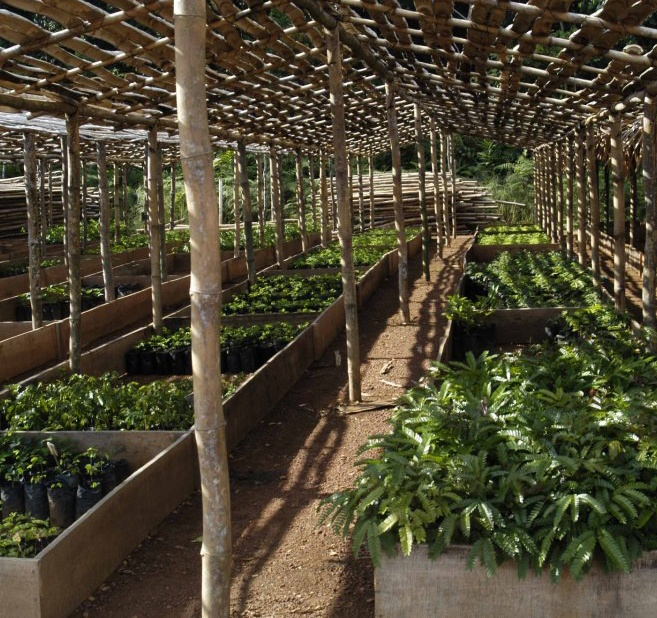 The fantastic new nursery MPD Congo have constructed, easily capable of holding several hundred thousand seedlings.