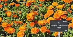 Resultado de imagen para nombre y fotos de plantas de invierno