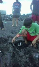 Pantai Kusamba Jadi Tempat Penyu Bertelur - http://denpostnews.com/2017/06/23/pantai-kusamba-jadi-tempat-penyu-bertelur/