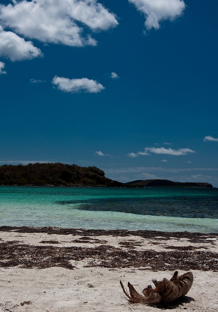 Vieques island hopefully gonna be our christmas trip for Puerto rico vacation ideas