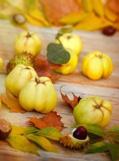 Tout savoir sur le coing / All you want to konw about quince