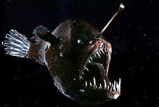 морской черт - Поиск в Google