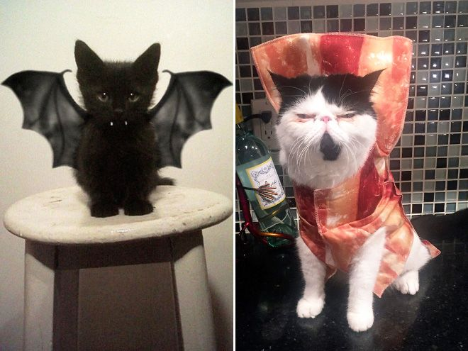 halloween costumes for cats d - Funny Cat Halloween