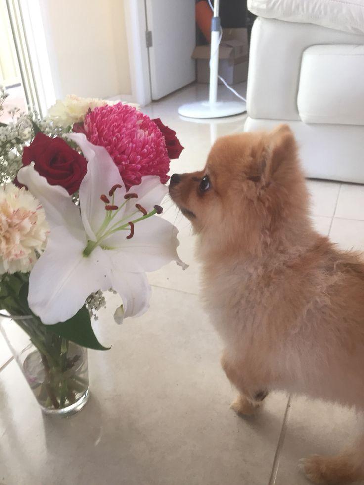 Sasha loving the fresh flowers