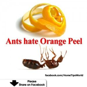 Did you know, mix orange peels and water, spray the solution outside your home, will prevent ants from coming in. Similar thing goes for using orange peels to keep flies away. Hang up orange peel around your patio and it will keep them away.