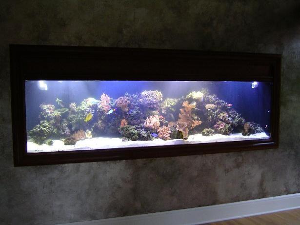 Built in tropical fish tank