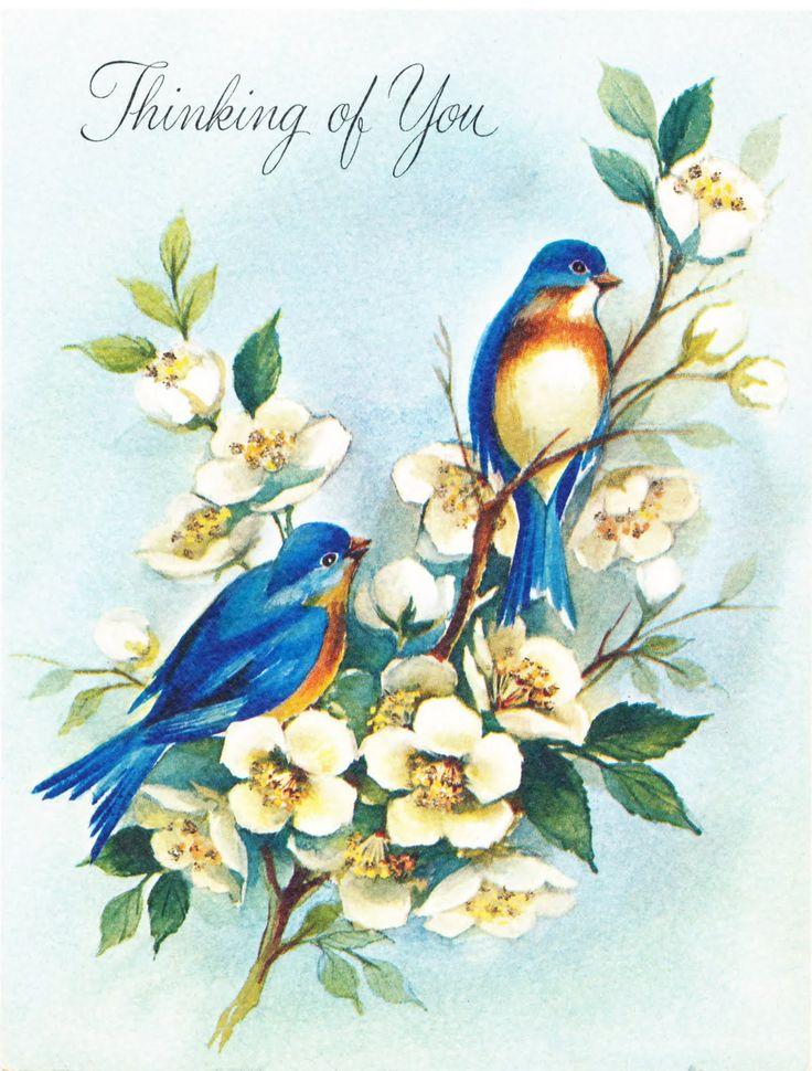 Птицы с открыток, надписью про