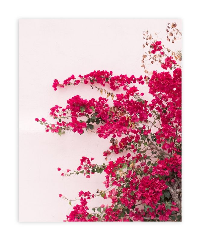 Bright Bougainvillea Limited Edition Art Print By The One With Wanderlust In Beautiful Frame Options And A Variety Of Siz Bougainvillea Art Wall Art Prints