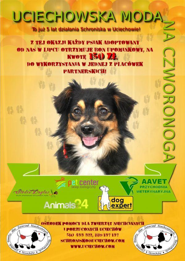 Podsumowanie lipca - pracowity i owocny miesiąc! #psy #adopcje #pomoc #schronisko