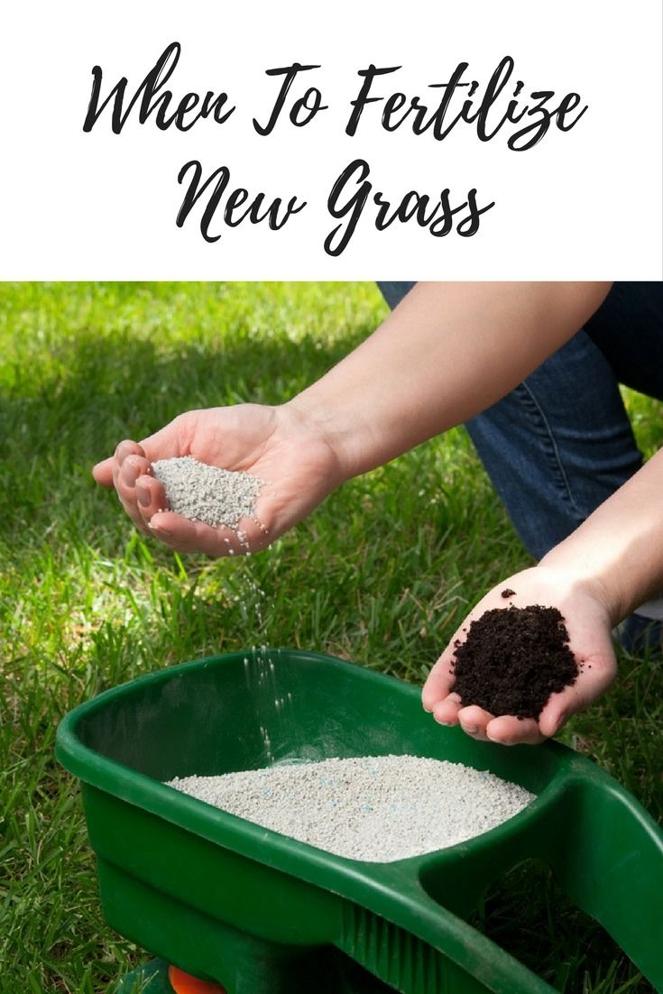 When To Fertilize New Grass With Images Grass Fertilizer Lawn Fertilizer When To Plant Vegetables