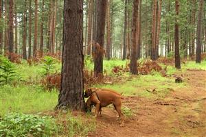 Drakensburg - Forest Walk