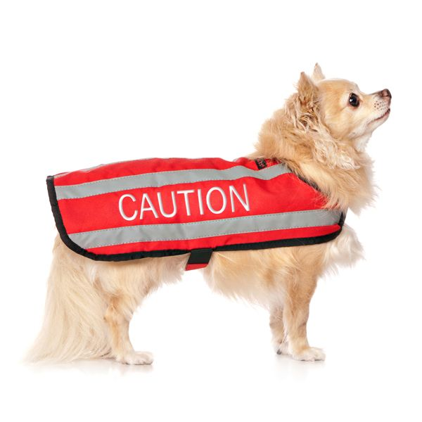 Do You Have A Reactive And Or Aggressive Dog And Wish The Public