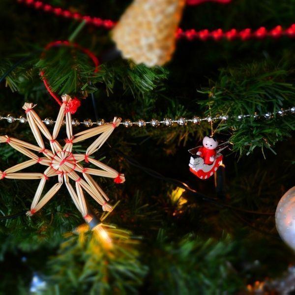 Comment Bien Choisir Son Sapin De Noel Nos 5 Conseils Mobilier