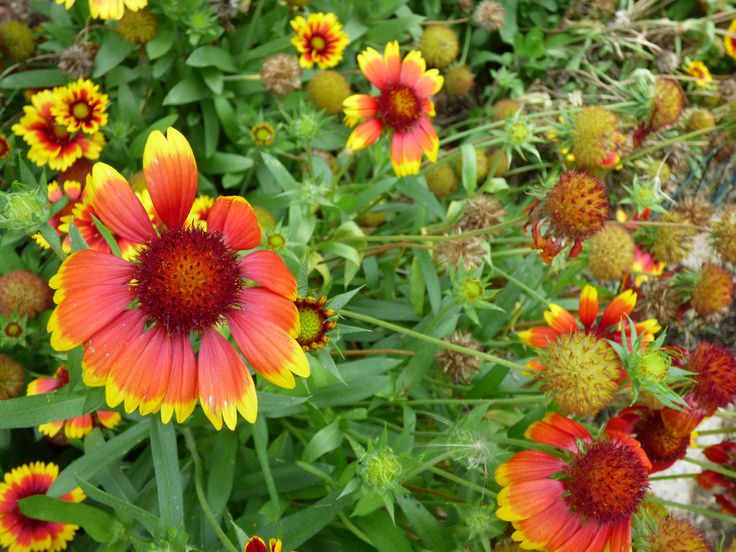 Flowers in the park in Bathurst