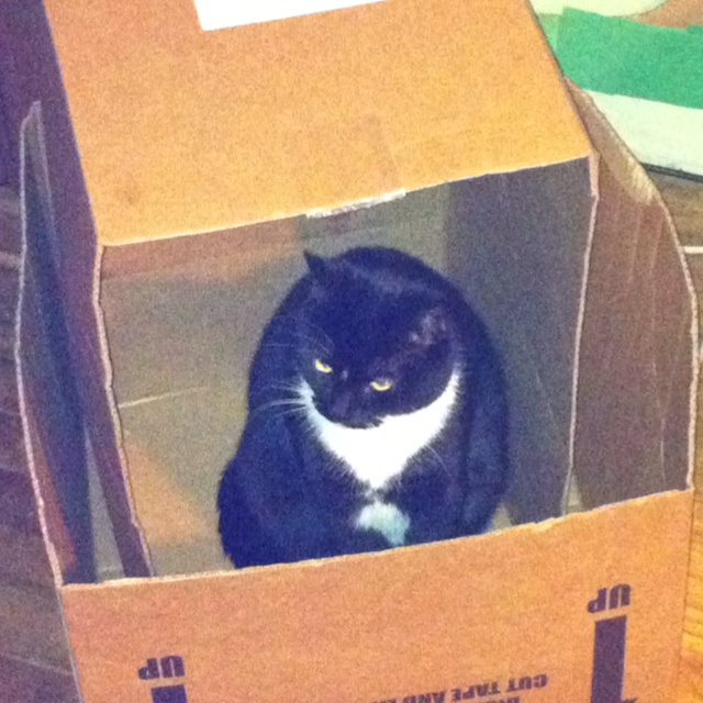 Box o'cat. What every house needs.