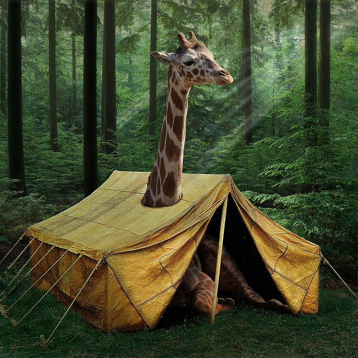 17 Best Images About Camping On Pinterest: 17 Best Images About Tents On Pinterest
