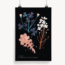 Poster botanique Kale Darling Clementine