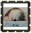 With your help, Blake could appear in a Fido ad. Plus, Fido is donating $ 1 for every vote to Lions Foundation of Canada Dog Guides, up to $ 200,000. Check out this pooch's Casting Sheet and vote every day at http://www.fidocastingcall.ca