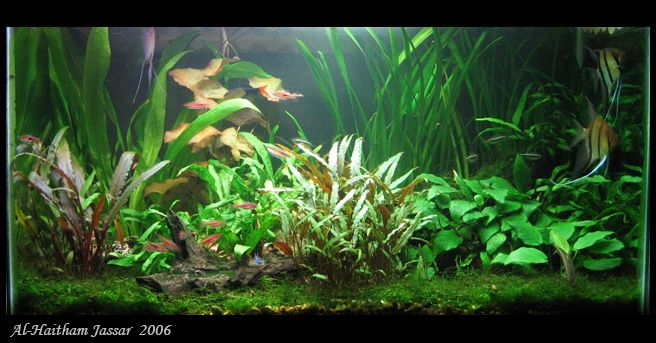 Non co2 non excel low tech planted tanks the planted for Aquarium co2