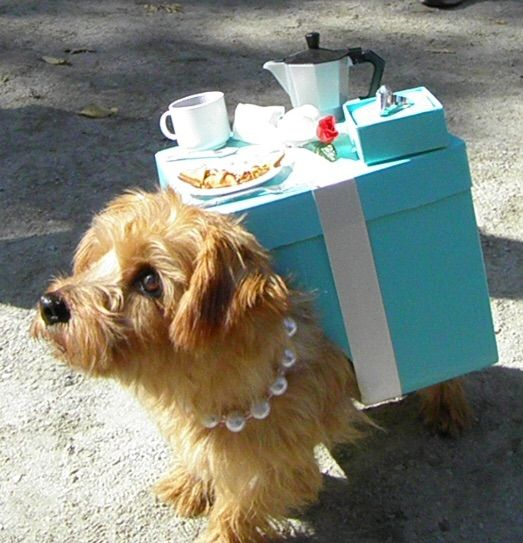breakfast at tiffanys perfect doggy halloween costume - Dogs With Halloween Costumes On