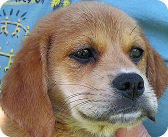 Best 20 Pomeranian Mix Ideas On Pinterest Husky
