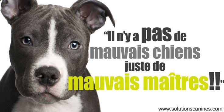 Il n'y a pas de mauvais chiens juste de mauvais maîtres!!