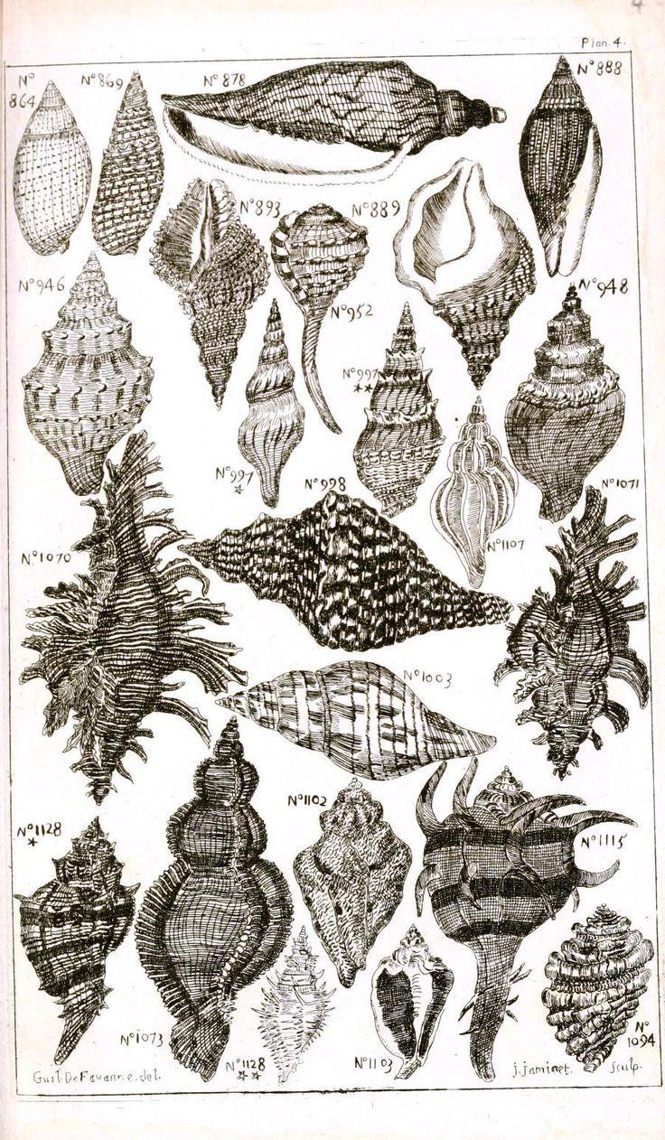 beautiful black vintage seashell print