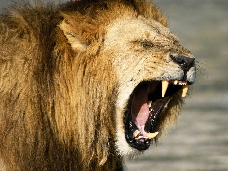 The Fable of the Lion and the Scavengers