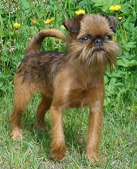 "Ever since seeing ""Jim"" on Mike and Molly, I've wanted one of these dogs!"