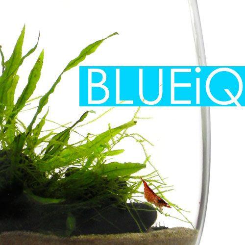 BLUEiQ Miniature Ecosystem Your Personalized, Educational Ecosystem $79.00