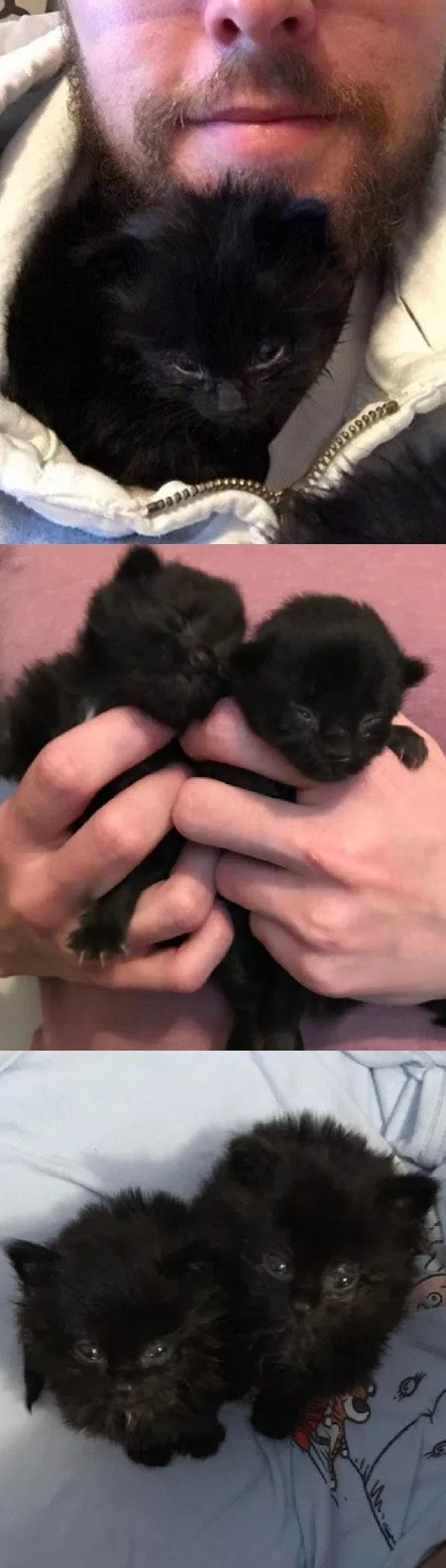 Man Heard Chirps Under His House, Found Tiniest Furballs And Raised Them Into Magnificent Cats…