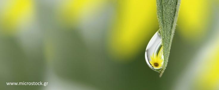 Sunflower Water Drop