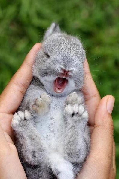 Baby animals yawning. There's really nothing cuter. #babyanimals #MeltYourHeart #adorable