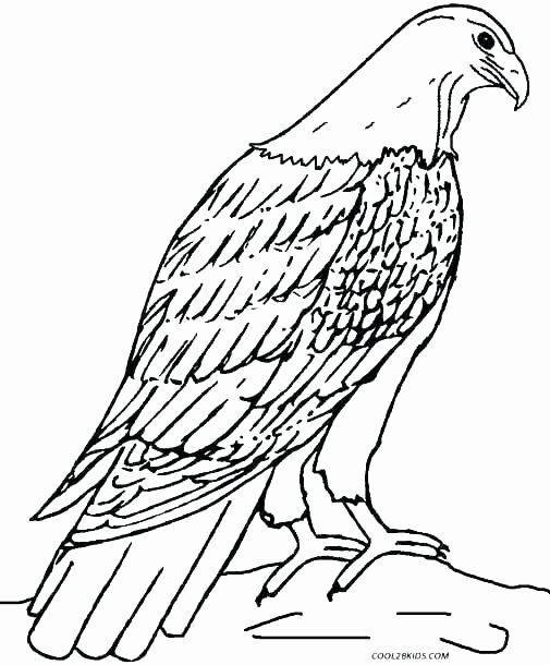 Peregrine Falcon Coloring Page Inspirational Eagle ...