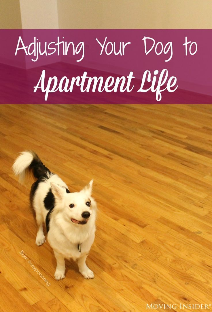 Moving into an apartment with your dog? Learn how to make the transition here!