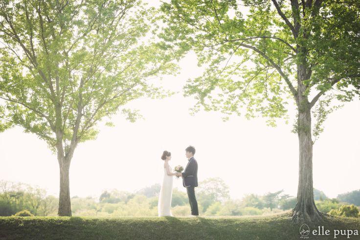 緑と黄色*ほっこりカラーで前撮り |*ウェディングフォト elle pupa blog*|Ameba (アメーバ)