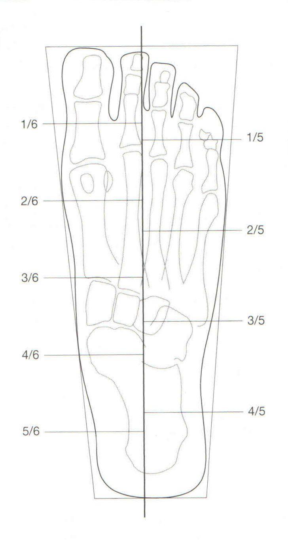 División del trapecio de inscripción (Vista anteroposterior)
