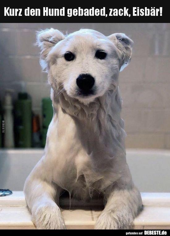 Kurz den Hund gebaded, zack, Eisbär!.. | Lustige …