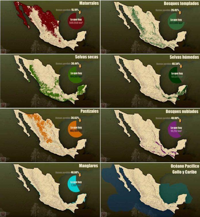 Ecosistemas De México Cuáles Son Tipos Vegetación Fauna Y Ejemplos Ecosistemas Maquetas De Ecosistemas Tipos De Ecosistemas