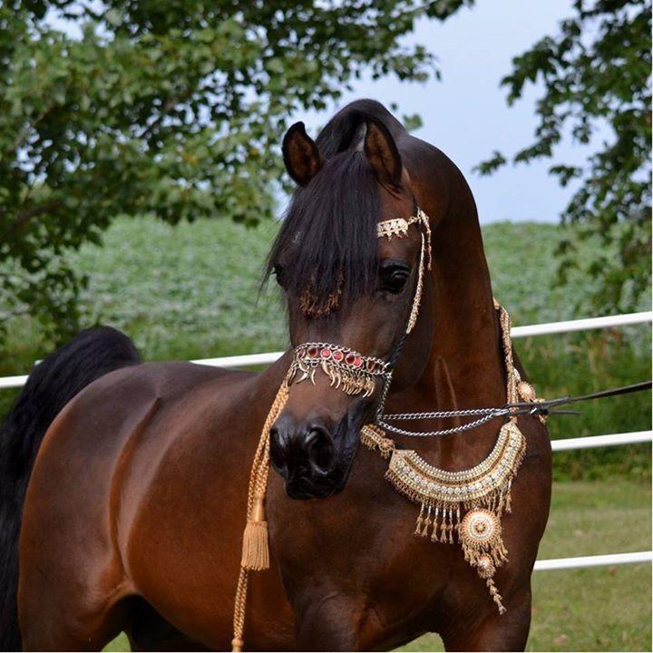 bay horse show - photo #44