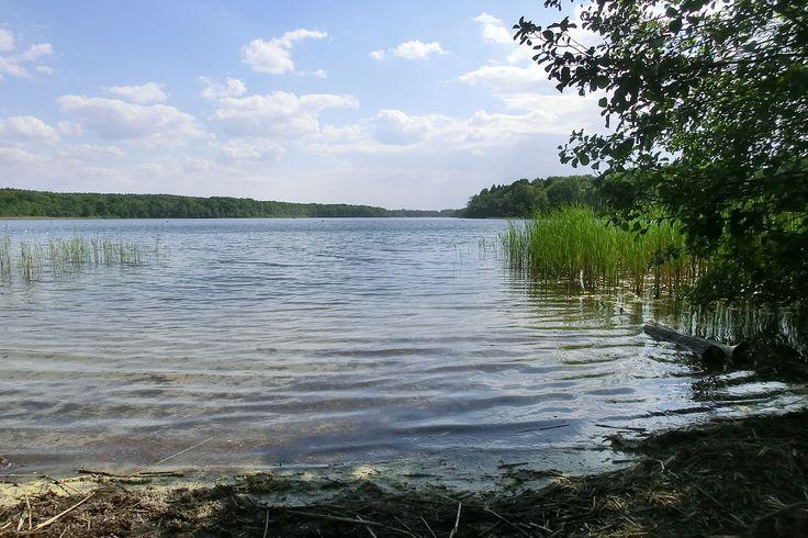 """Sacrower See bei Potsdam – Blick von der Nordspitze nach Südwesten. Der Sacrower See ist ein See in Brandenburg im nördlichen Teil der Stadt Potsdam im Ortsteil Sacrow. Der kalkreiche, geschichtete Flachlandsee liegt vollständig im Naturschutzgebiet """"Sacrower See und Königswald"""".  Zusammen mit dem Seeburger Fenn und dem Groß Glienicker See bildet er eine Seenkette, die in einer glazialen Rinne liegt, in die sich auch der 1,6 Kilometer südlich gelegene Heilige See einordnet."""