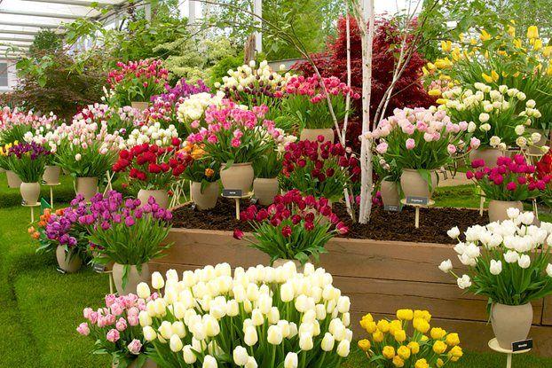 Bloms Bulbs