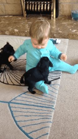 Babies And Puppies Love To Play See this dog in action here http://pewpaw.com/?p=30314