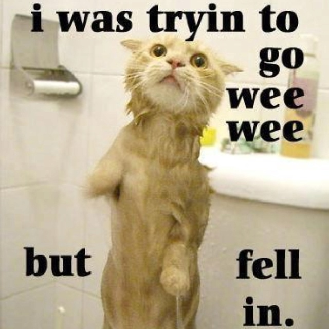 Best Funny Animals And WhatnotXD Images On Pinterest At Home - Cats who tried so hard but failed in the most hilarious ways